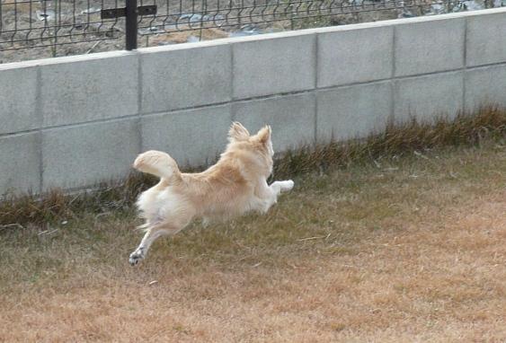 脚が水平より高く上がるので、浮いてる時間が多いような気がする。。