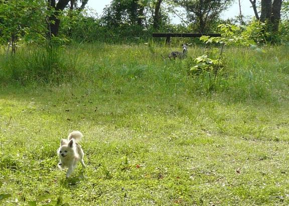 でも、こんだけ草の中を走り回って、ダニー1匹なら少ない方かな。