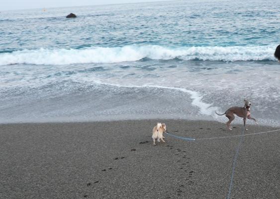 さすが、瀬戸内海と違って波が高いです