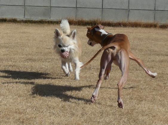 ディオ、美味しそうな腿肉・笑