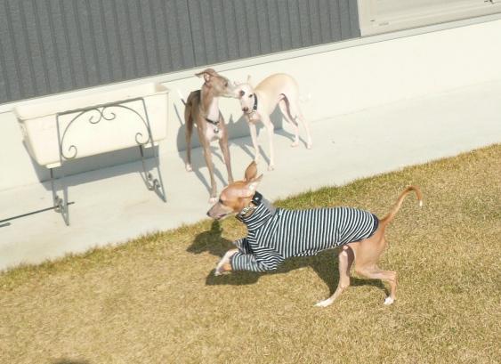 犬走り土間、大人気です。なんで?