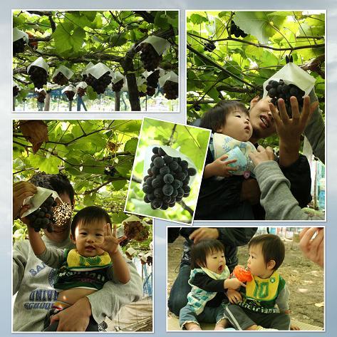 200910ブドウ狩りblog01