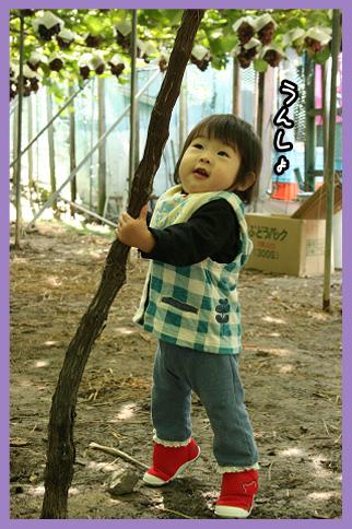 2009 10 11 ぶどう狩り blog09のコピー