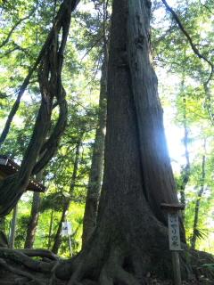 思いやりの木