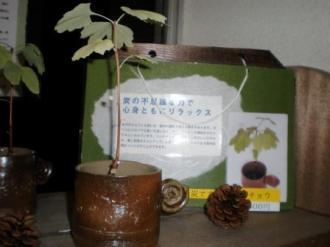 香川県ふじみ園 ZIKKEN09 -2
