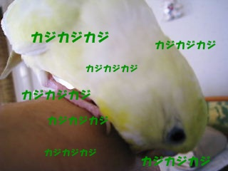IMG230329-3.jpg