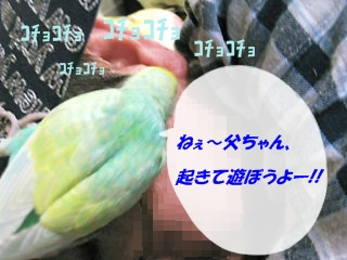 IMG230331-3.jpg