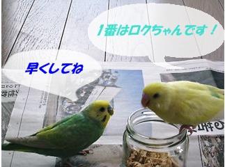 IMG230402-1.jpg