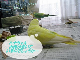 IMG230402-7.jpg