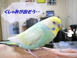 IMG230406-1.jpg