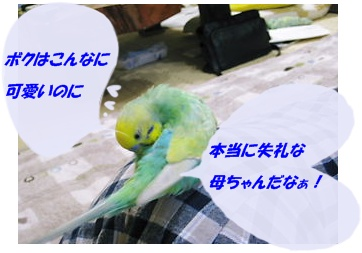 IMG230406-4.jpg