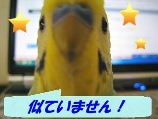 IMG230411-1.jpg