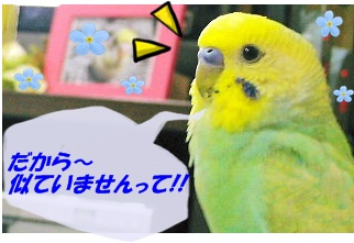 IMG230411_2.jpg