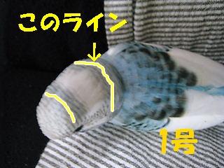 IMG230419-3.jpg