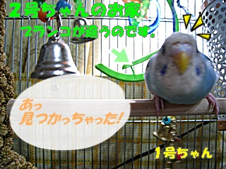 IMG230620-1.jpg