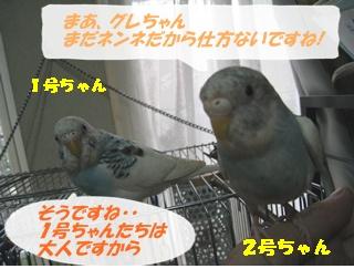 IMG230804-4.jpg