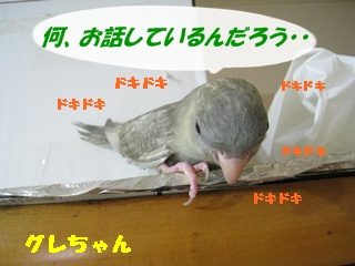 IMG230804-5.jpg