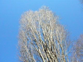 きれぎれの風採 「ムサシノケヤキ02」