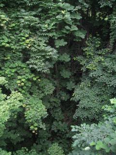 藻岩山 2010+019-s_convert_20100709222645