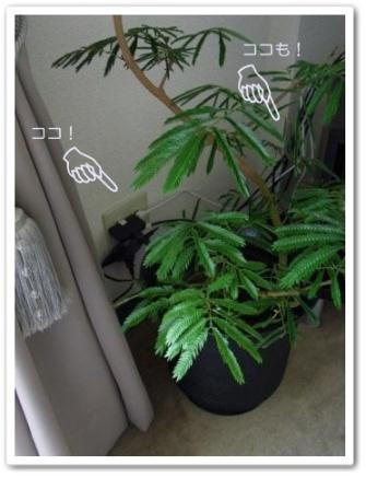 エバーフレッシュ 観葉植物 コードを隠す