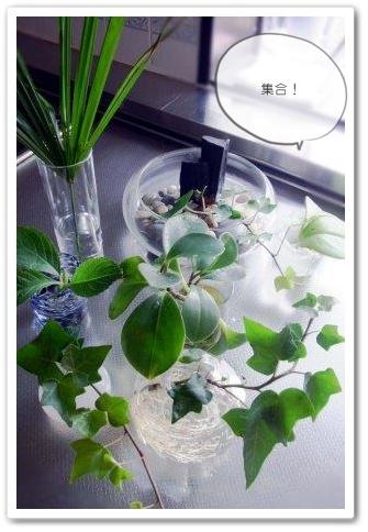 月曜日は、お水やりの日  インテリアグリーン 小さな植物
