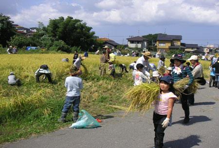 2009稲刈り