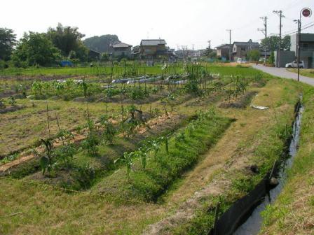 2008畑の様子