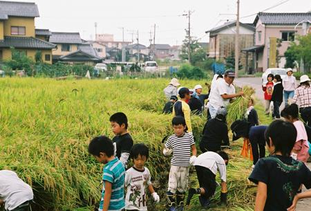 2008稲刈1