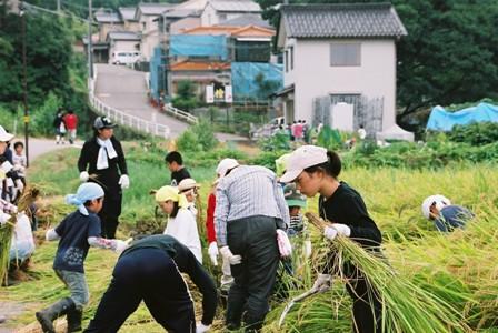 2008稲刈3