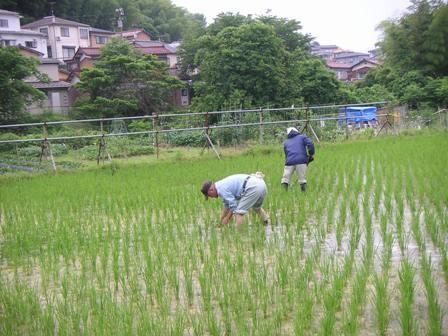 20110618田んぼの草刈1