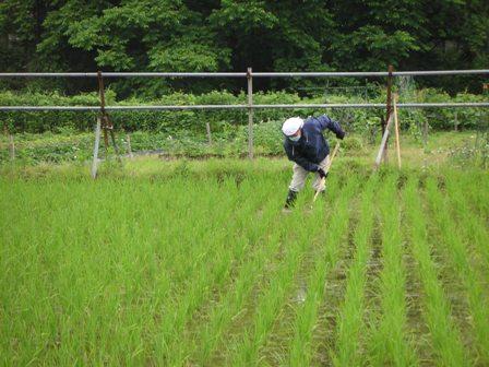 20110618田んぼの草刈2