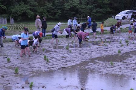 2011田植え12