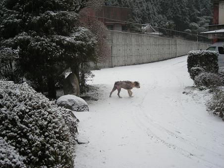 冬の豊楽3