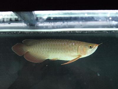 2011.9.2幼魚1