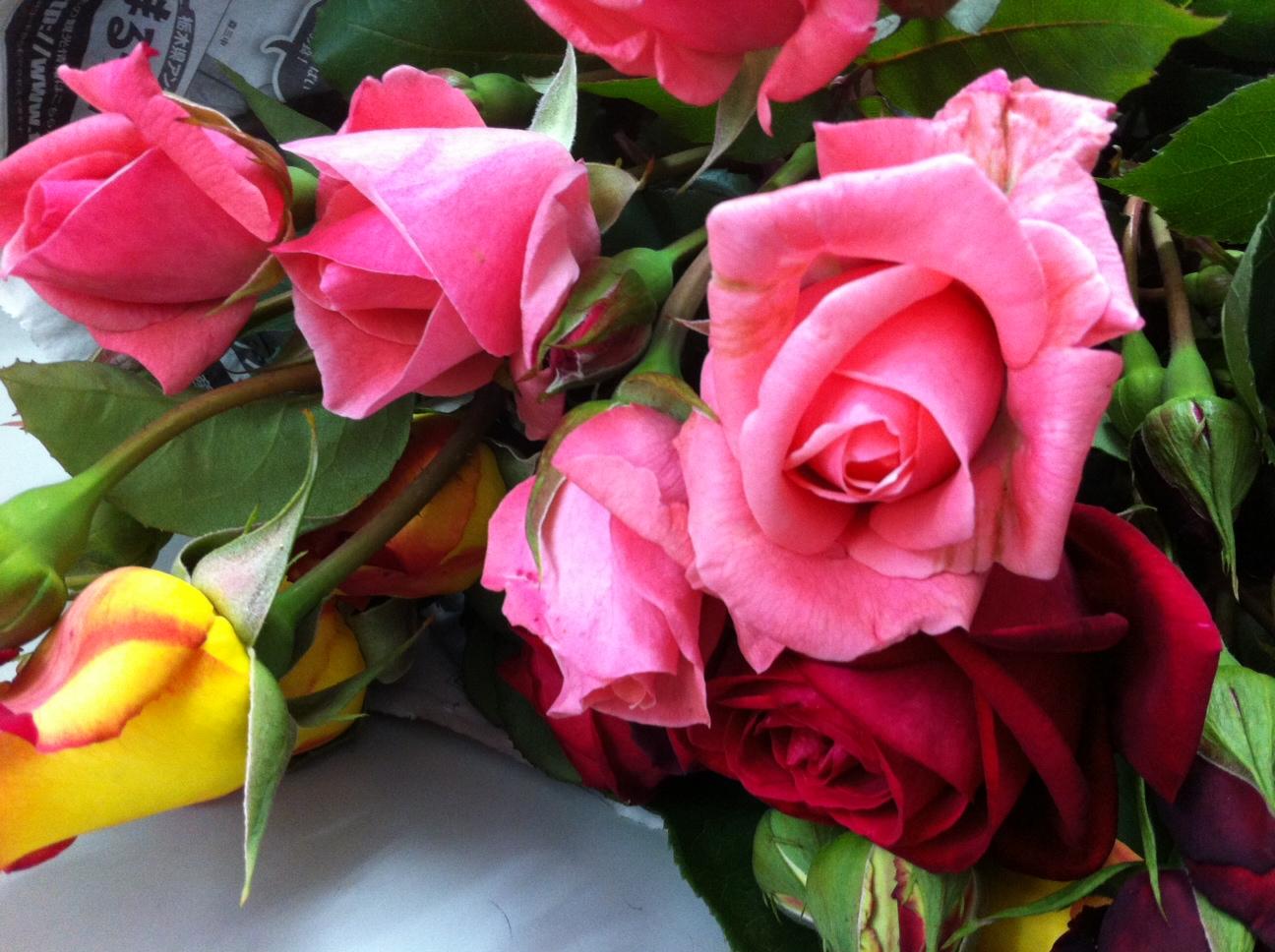 20120606薔薇