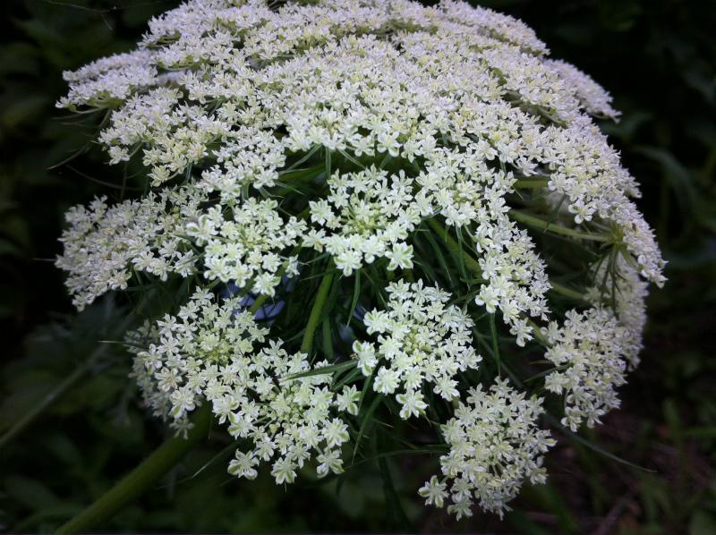 20120714花