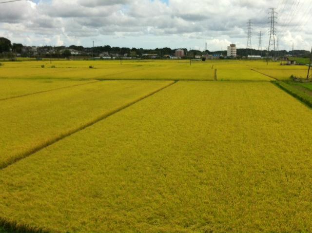20120901稲