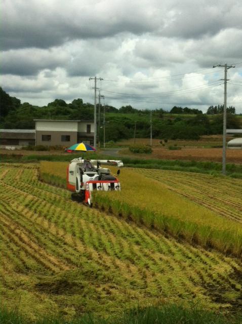 20120901稲刈り
