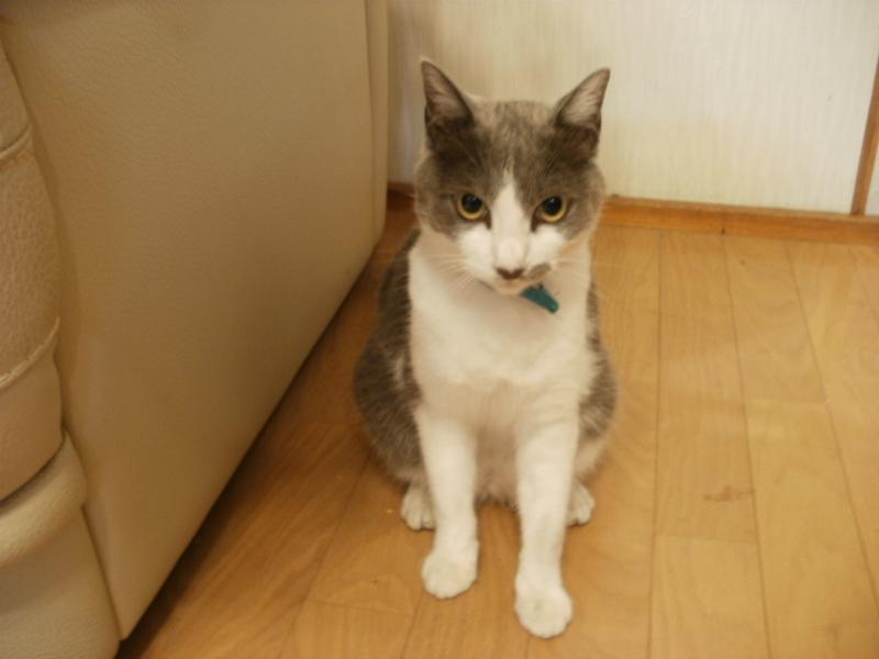 20120802猫2