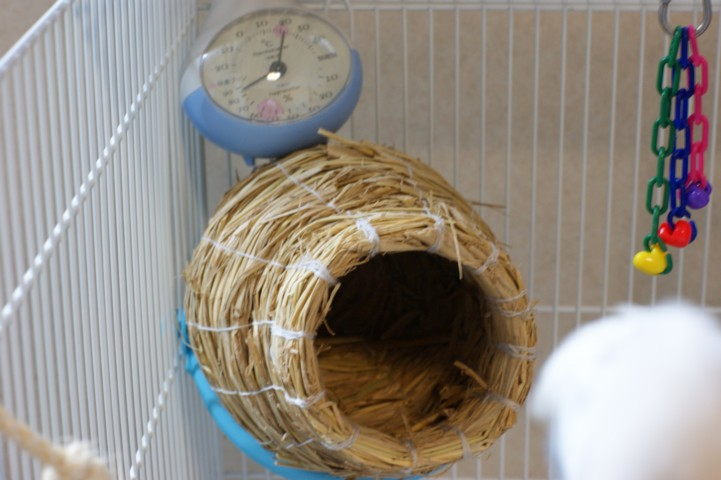 ツボ巣と温度計