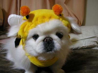 ハチパト①