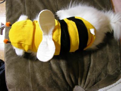ハチパト②