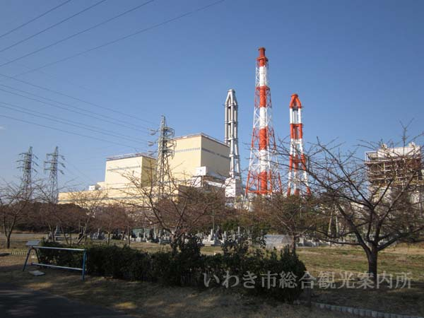 河津桜2012_327