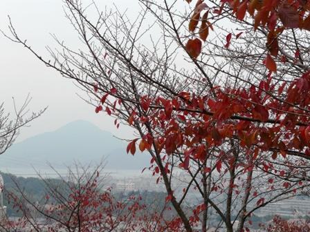 松山総合公園 8