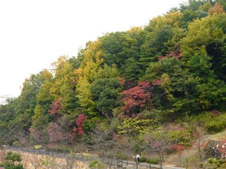 松山総合公園 9