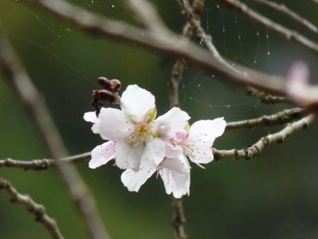 惣河内神社 8  百日桜