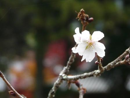 惣河内神社 9  百日桜