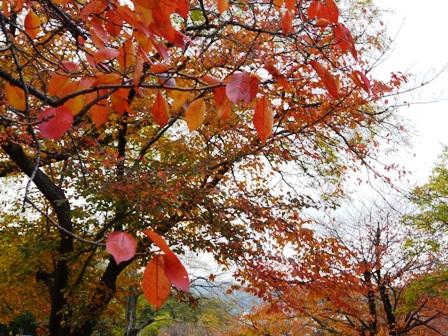 石手川公園 6