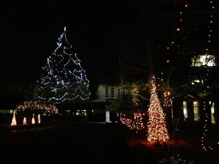 松山東雲女子大学 クリスマスツリー 1