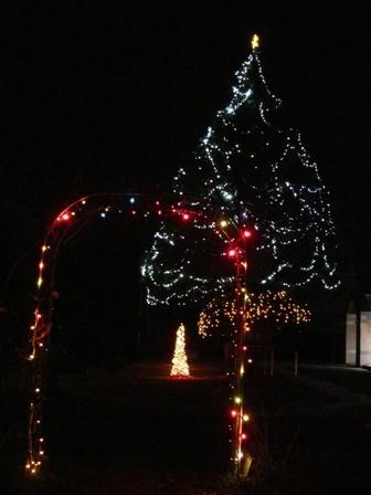 松山東雲女子大学 クリスマスツリー 5